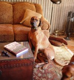 Pence Ranch Dogs - Rhodesian Ridgeback